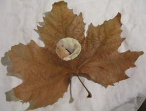 Collection d'automne
