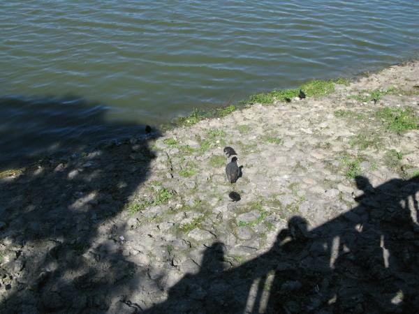 Aux-trois-canards.jpg