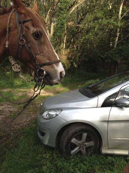 deux-chevaux.jpg