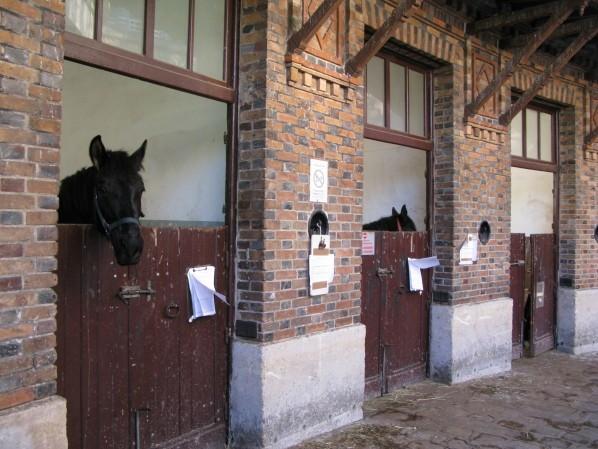 cheval-en-trois.jpg