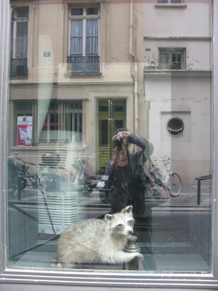 blaireaux-des-villes.jpg