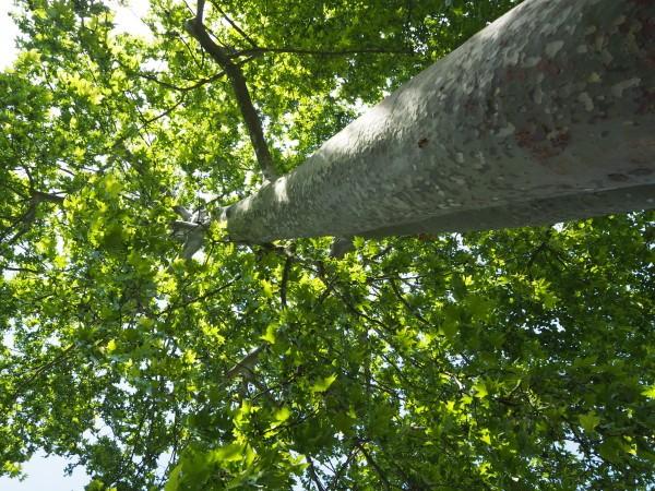 Au-pied-de-mon-arbre.JPG