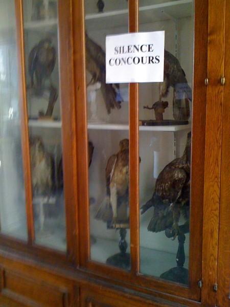 Le-silence-des-oiseaux.JPG